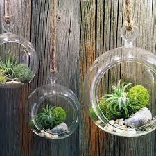 plants plant arrangements living walls and terrariums billies