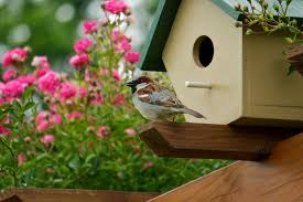 Types Of Community Gardens - bird gardens flowers and plants to attract wildlife proflowers
