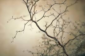 buddhist teacher robert aitken on the art and poetry of zen