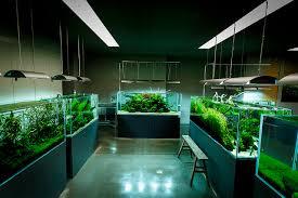 Aquascaping Shop Ada Nature Aquarium Gallery Nature Aquarium Aquariums And