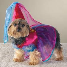 Halloween Costume Dog Doggy 5