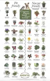 list of pet friendly and toxic plants to pets pet friendly plants