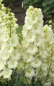 638 best flowers u0026 plants images on pinterest flower