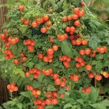 vegetable garden tips for beginner vegetable gardens for