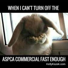 Aspca Meme - noooo not the save the dogs commercial from the blog kellykazek