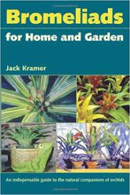 care for bromeliad plant house plants u0026 flowers