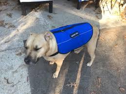 Comfort Pet Certification Service Dog Registration U0026 Emotional Support Animal Registration