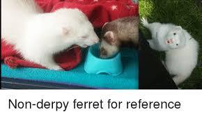 Ferret Meme - non derpy ferret for reference ferret meme on astrologymemes com
