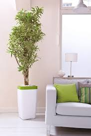 indoor trees that don t need light 99 great ideas to display houseplants indoor plants decoration