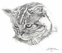 english golden retriever miriam mas art drawings