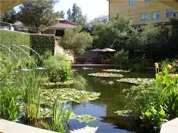 koi u0026 fish pond design landscaping network