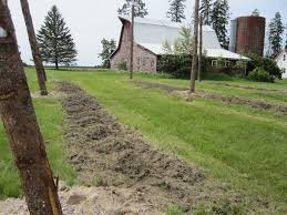 homestead hops growing hops in bemidji minnesota