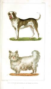 best 25 antique dog prints ideas on pinterest collie dog
