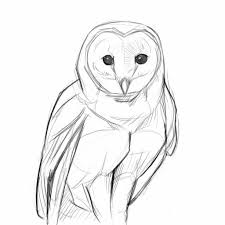 pencil sketch of owl 1000 images about beautiful pencil drawings
