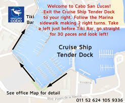 cabo san lucas cruise ship schedule for whale watching tours