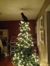 best tree for cats rainforest islands ferry