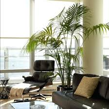 home decor with plants artificial plants for home decor wwwikeaideascom throughout