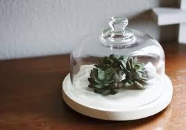 diy faux terrarium gimme some style