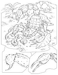 100 scorpion coloring page coloring pages of dangerous
