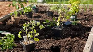 how to make a vegetable garden edible gardening miracle gro