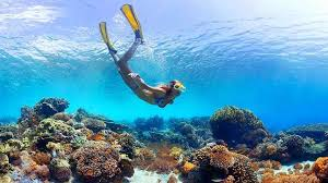 snorkeling images Best snorkeling dives jpg