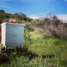 beekeeping like a 10 mistakes new beekeepers make