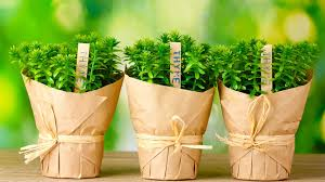 top 11 eco friendly green gift ideas that are unique u0026 cheap