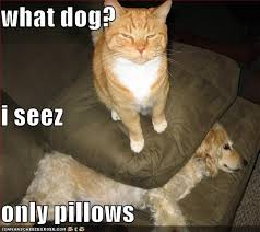 Cat Fight Meme - latest funny pictures funny dogs and cats together