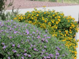 choosing plants with colors flowers drought tolerant heat