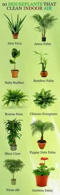 best plants for air quality most inspiring top 5 best indoor plants for air purifying youtube