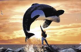 free willy images free willy wallpaper and background photos