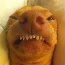 Tuna The Dog Meme - tuna dog overbite