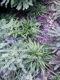 native ohio plants pollination gardenopolis cleveland