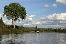 allagash river u2013 elm tree u2013 mahoosuc guide service