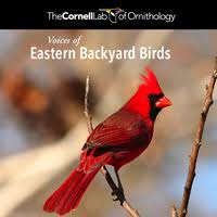 Backyard Bird Store Ml Audio Voices Of Eastern Backyard Birds
