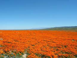 antelope valley california poppy reserve wikipedia