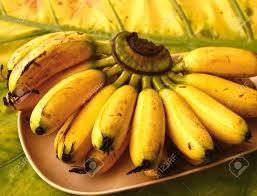 mini banana tree mini banana bunch on palm leaf tree close up photo stock photo