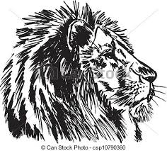 vector clipart of hand drawn sketch of a lion looking intently at
