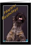 birthday cards with scottish terrier from greeting card universe