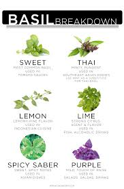 different types of purple 6 types of basil and how to use them deliciously obsev