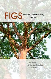 eastern and western ghats figs of eastern ghats india