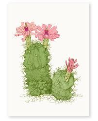 annie davidson u2014 u0027desert flower u0027 limited edition art print
