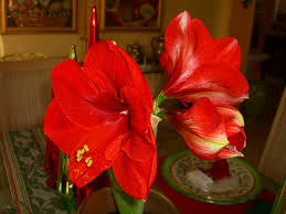 christmas flowers christmas flowers palmabella s passions