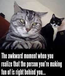 Meme Pictures With Captions - 30 funny animal captions part 58 30 pics amazing creatures