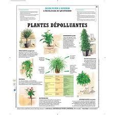 plante d駱olluante bureau plantes dépolluantes florideeo
