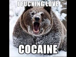 Coke Bear Meme - a bear coming out of its hibernation den for the first time pics