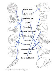 match the seashells to their names worksheet seashells by millhill
