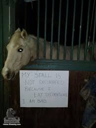 Naughty Decorations 17 Best Stall Decoration Ideas Images On Pinterest Horse Stalls