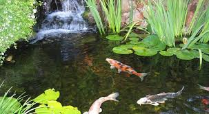 Pictures Of Backyard Ponds by 7 Ideas For Building A Koi Fish And Backyard Pond U2013 Home And