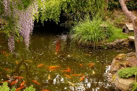 choosing the right fish for your pond u2013 all about aquariums